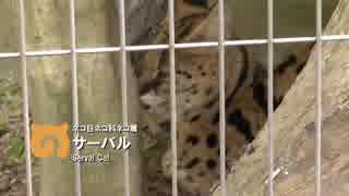 ぽんこつフレンズ 3話「たからさがし」【東山動植物園】