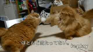 【マンチカンズ】届かない猫パンチ