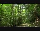 新緑の京都(2017/5/14)