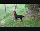 「よ~し、よしよし」と犬を可愛がるカンガルー
