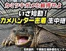 第33位:【凶暴カミツキガメを捕獲】カメハンター密着第1弾