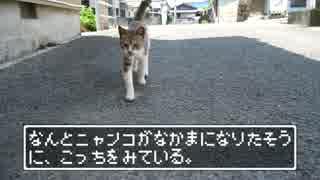【ニャンコクエスト】空と海と猫の島