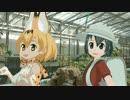 【MMD実写合成】サーバルちゃんと花鳥園行ってきた