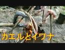 ほーじのアウトドアin福井_カエルとイワナ