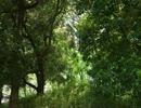 トキワの森テクノ