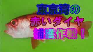 東京湾の赤いダイヤ捕獲作戦 後編