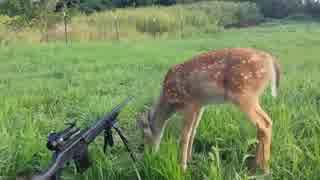 ホモと見る銃のハプニング.webm