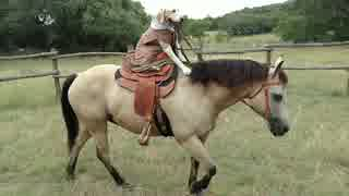 【ファッ!?】馬に乗るわんこwwwwwww