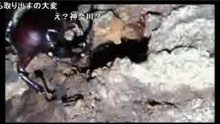 【生放送】昆虫採集(2017/07/03)