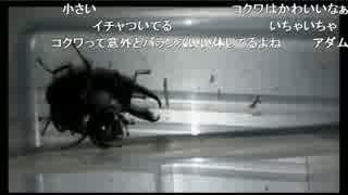 【生放送】昆虫採集2(2017/07/03)