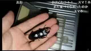 【生放送】昆虫採集(エピローグ)(2017/07/05)
