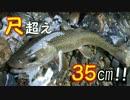 【アウトドア】ミミズで35cmのイワナ釣ったった。