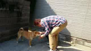 両親を迎え入れ撮影者を鼻で笑う柴犬