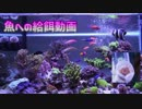 【アクアリウム】魚への給餌動画 2017/05