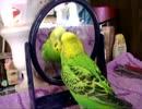 鏡の中のお友達とおしゃべり