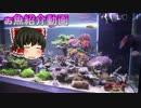 【アクアリウム】お魚紹介動画 2017/08