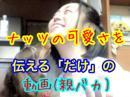 早川亜希動画#434≪ナッツの可愛さをひたすら伝える動画(親バカ)≫※会員限定※