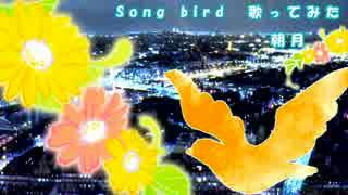Songbird 歌ってみた【朝月】