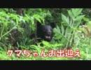 【黒部源流釣り①】クマ現る!折立登山口から薬師沢小屋を目指せ!!