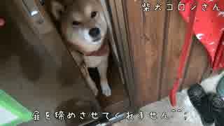 扉をしめさせてくれない柴犬