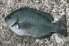 釣り動画ロマンを求めて 83釣目(秋谷漁港