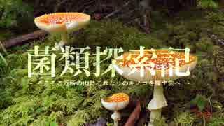 【キノコ狩り_201706XX】 菌類探索記 「梅