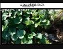 家庭菜園 ごじゃっぺ農園部 パート6