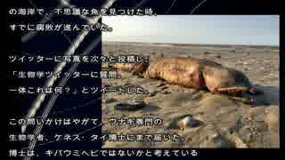 ハリケーン「ハービー」砂浜に不思議な生き物発見!!