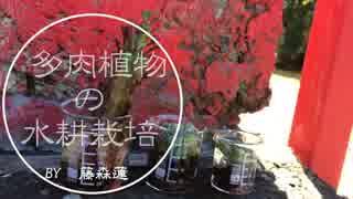 【100均でできる】多肉植物の水耕栽培【藤森蓮】