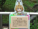 たたずむサーバル【多摩動物公園】