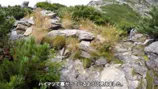 日本で二番目に高い山】北岳 テント泊登山 その3-2:八本歯のコル(2)