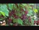 ゆっくりの田舎と自然 第18話「秋の香