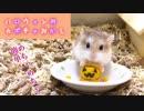 【ハム動画】超簡単!!ハロウィン用 ハムスターのおかしの作り方