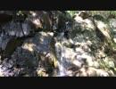 宮崎県照葉大吊橋  滝