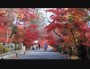 紅葉の京都(2017/11/12)