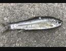 釣り動画ロマンを求めて 107釣目(霞ヶ浦)