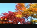 【kokone】紅葉【オリジナル】