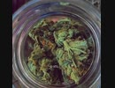 What You Don't Know About Medical Marijuana Benefits
