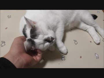 1ヶ月間の過酷なダイエットに勝利しパーフェクトボディを手に入れた猫