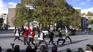 【京大学祭】宵々古今 クスノキ前で 踊ってみた【GOD団】 thumbnail