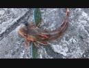 釣り動画ロマンを求めて 119釣目:前編(陸軍桟橋 ※浦賀湾)
