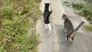 野良猫2匹について行ったら野良猫の集会