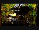 眺めて楽しむアクアリウム No.02 滝の有る水槽作ってみました