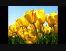 「世界に一つだけの花」を歌ってみた【Ma Yuyu】