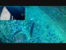 漁港の岸壁に水中カメラ付き仕掛けを沈め