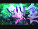 【UTAU音源配布】色彩と割れたグラス【茅歌コナギ-なつずいせん(儚)】