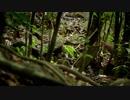 世界最小のネコ科、野生のサビイロネコ