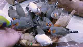 小鳥を大量に召喚してみた