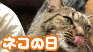 放電するネコ【猫の日】