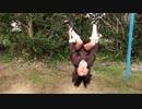 【小学校の校庭】吊り輪でコウモリになるあい♥普段遊び Elementary School